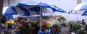Cuenca: Flower market