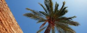 Palma de Mallorca: Palm Tree