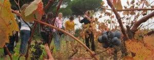 Cannes: Vineyard excursion
