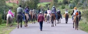Cusco: Horses