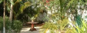 Playa del Carmen: Garden