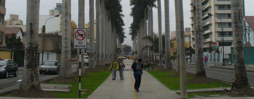 Lima: Palmeras
