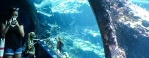 Biarritz Teens Aquarium