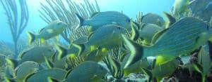 Playa del Carmen Diving-2
