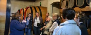 Florence: Over 50 wine vineyard excursion